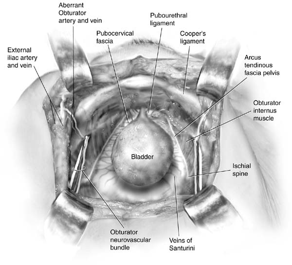 Anatomy of vaginal