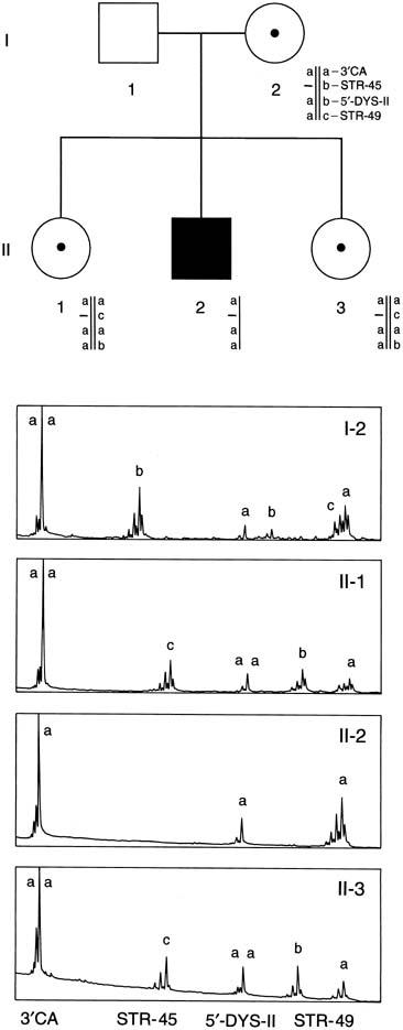 str mutation study