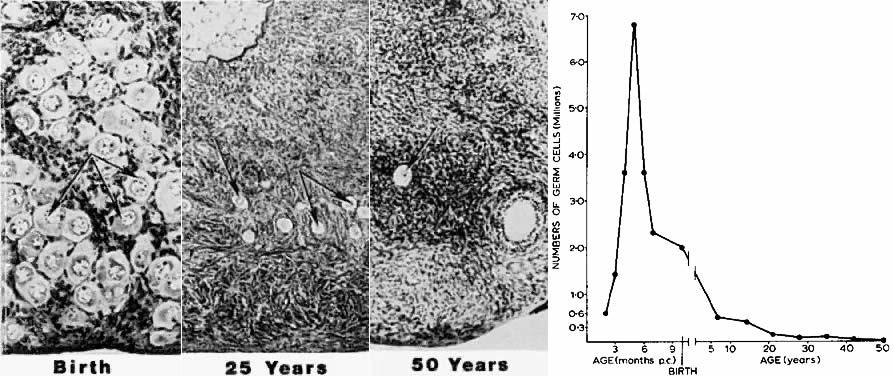 Follicle Growth And Development Glowm