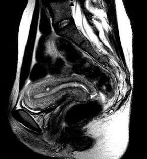 imaging atlas of human anatomy pdf free download