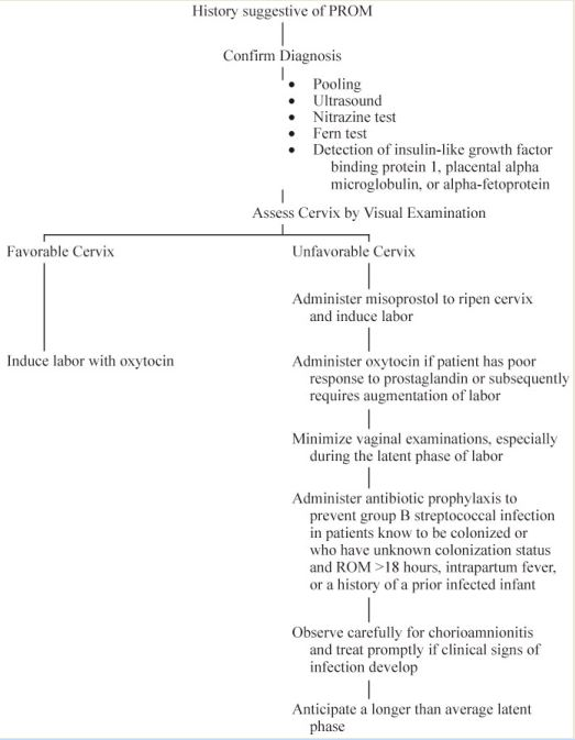 Management of Premature Rupture of the Membranes in Term Patients